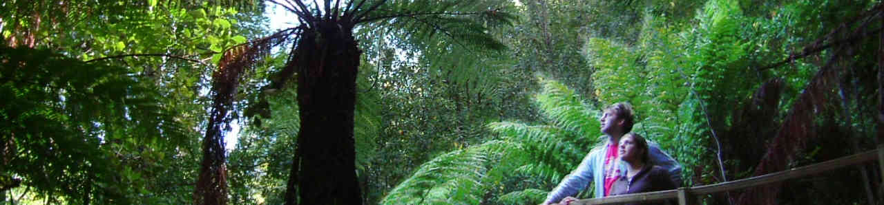 Tree Fern Bridge